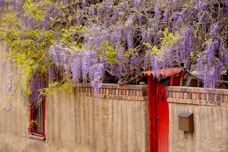 Wysteria-Door-Santa-Fe.jpg