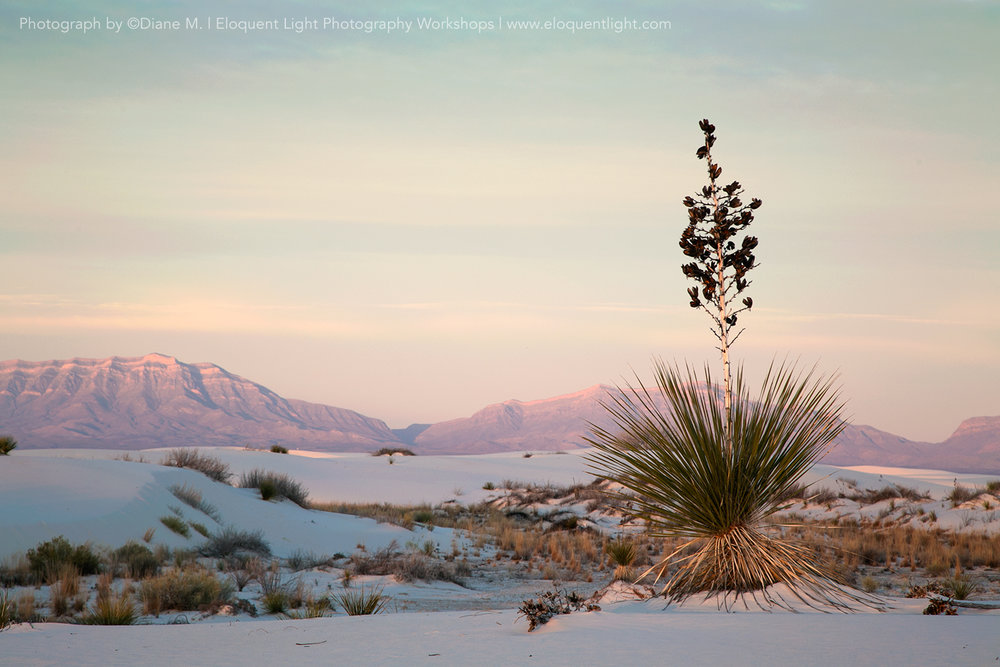 Mountain-and-Yucca_Marasciulo.jpg