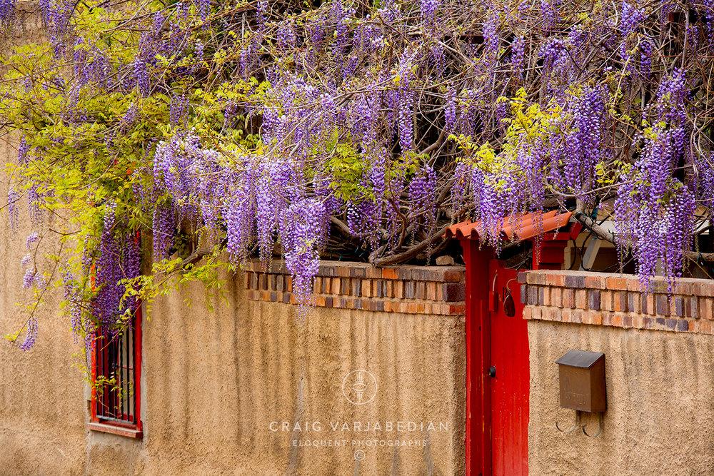 Wysteria-Door-Santa-Fe-Varjabedian.jpg