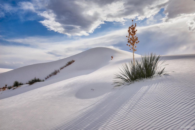 DSC_1930_Single+Yucca+and+dunes+copy.jpg