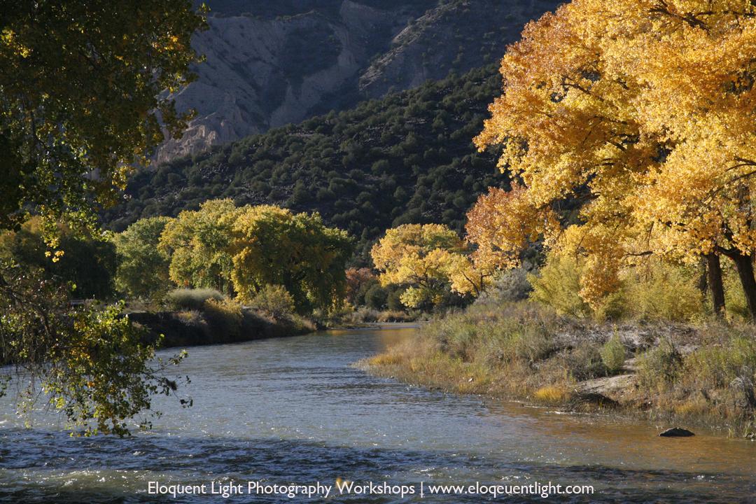 Autumn Cottonwoods-Rio Grande-New Mexio.jpg