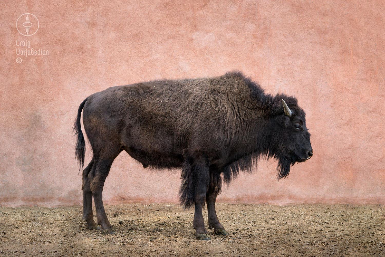 Clyde-Santa Fe-New Mexic0-©Craig Varjabedian.jpg