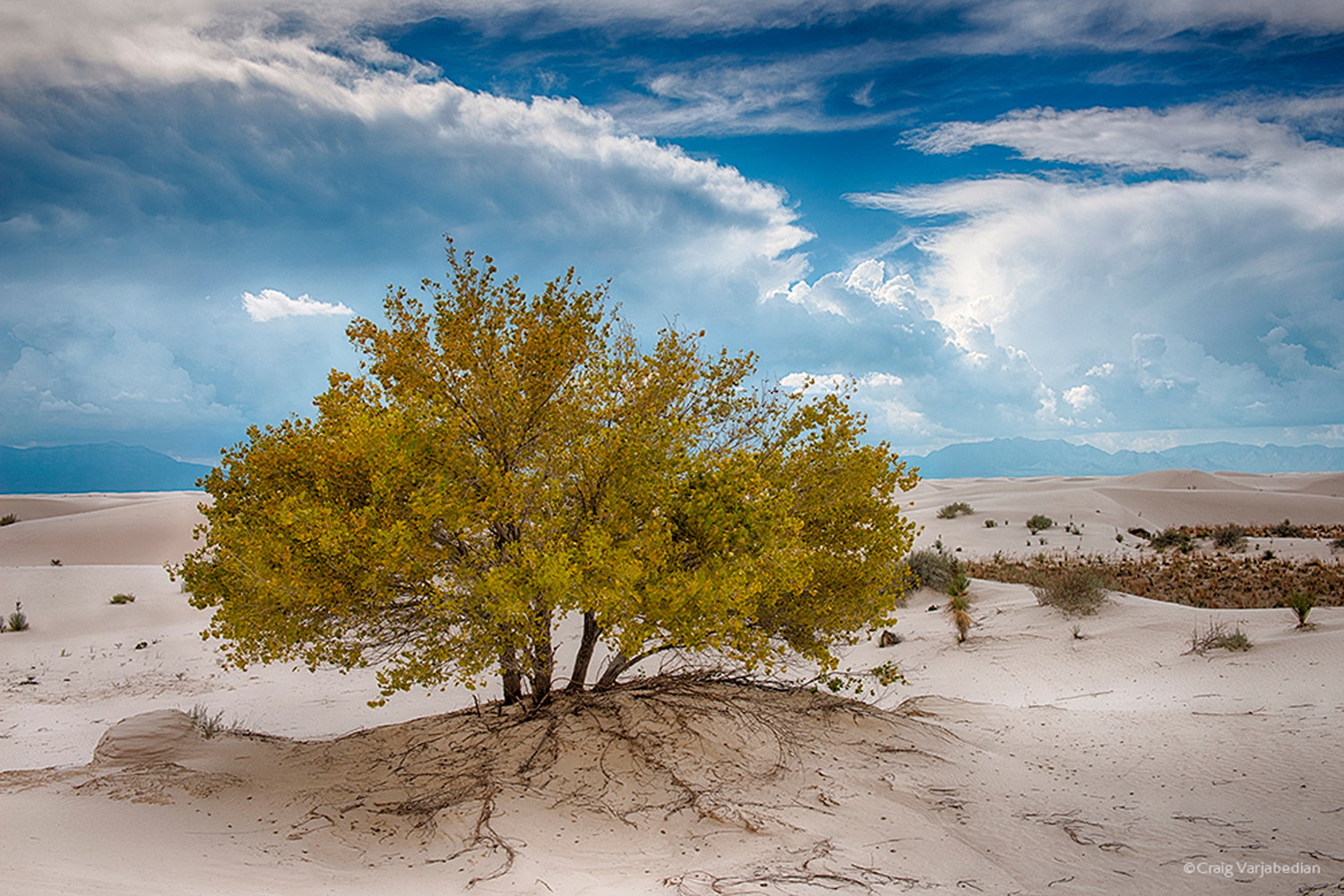 Cottonwood-Fall-White-Sands-Craig-Varjabedian.jpg