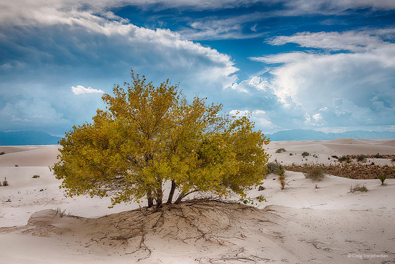 Cottonwood-Fall-White-Sands-Craig-Varjabedian.jpg