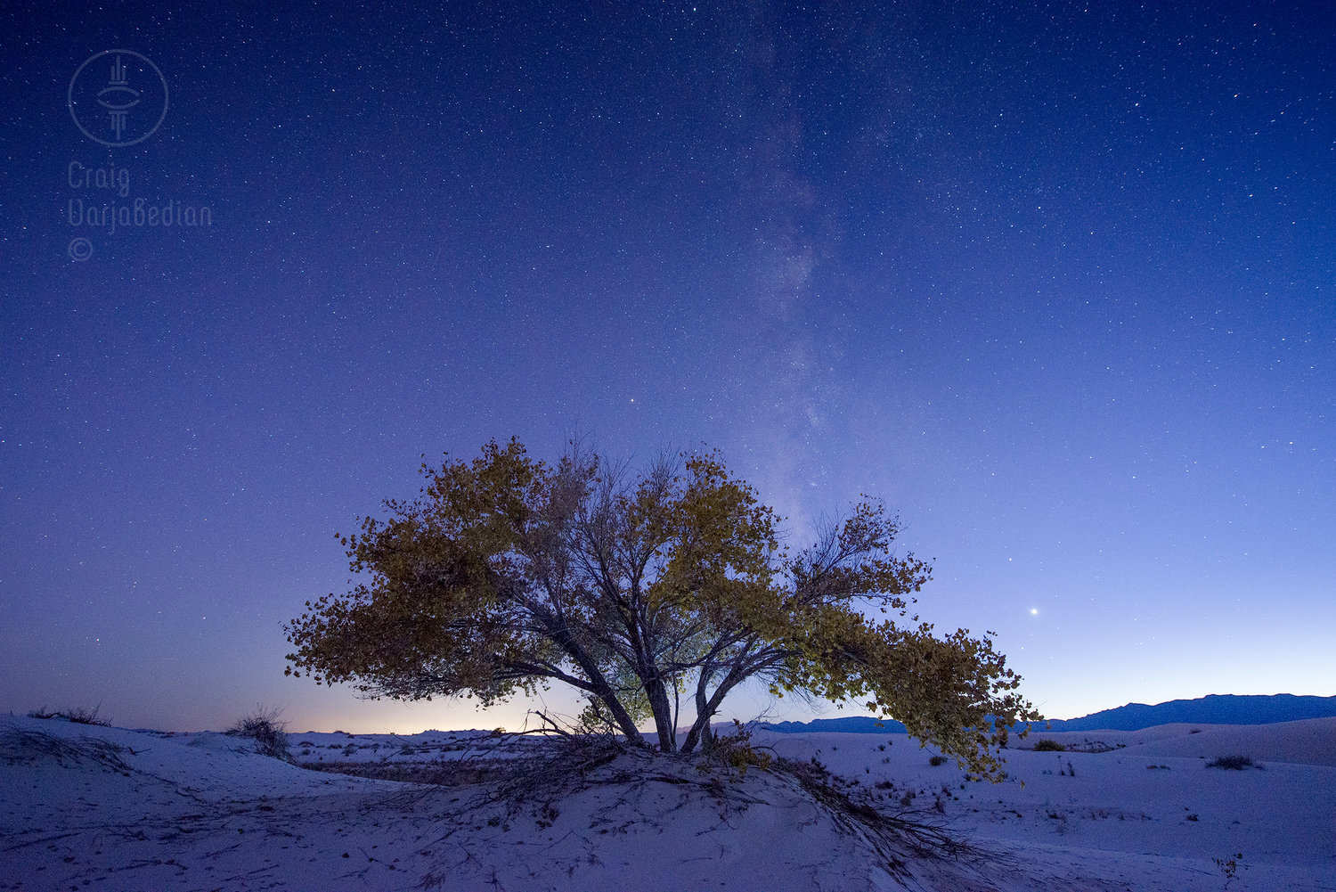 Cottonwood+Tee+and+Milky+Way.jpg