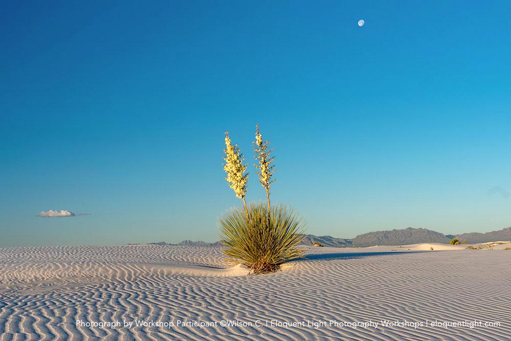 Wilson-C-White-Sands.jpg