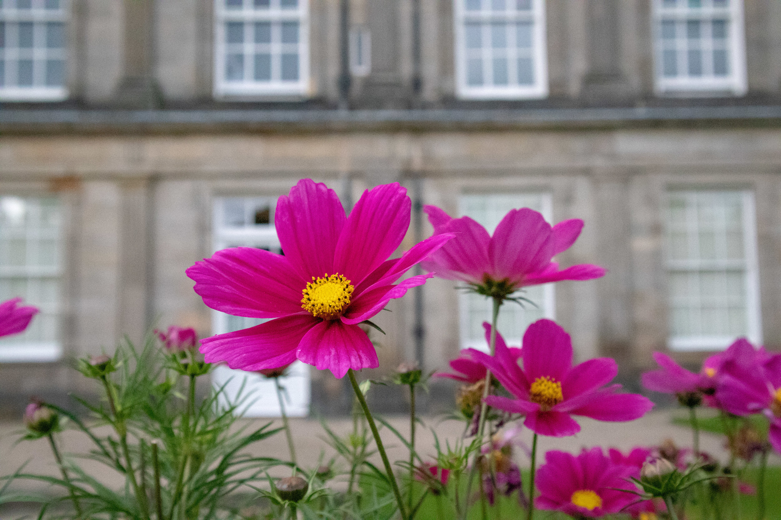 The Queen's garden flower! The Palace of Holyroodhouse in Edinburgh, Scotland. Read how to save money on your trip to Edinburgh! | MissFunctional Money