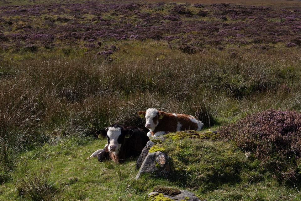 Isle of Skye, Scotland. |MissFunctional Money | #travel #scotland #honeymoonideas