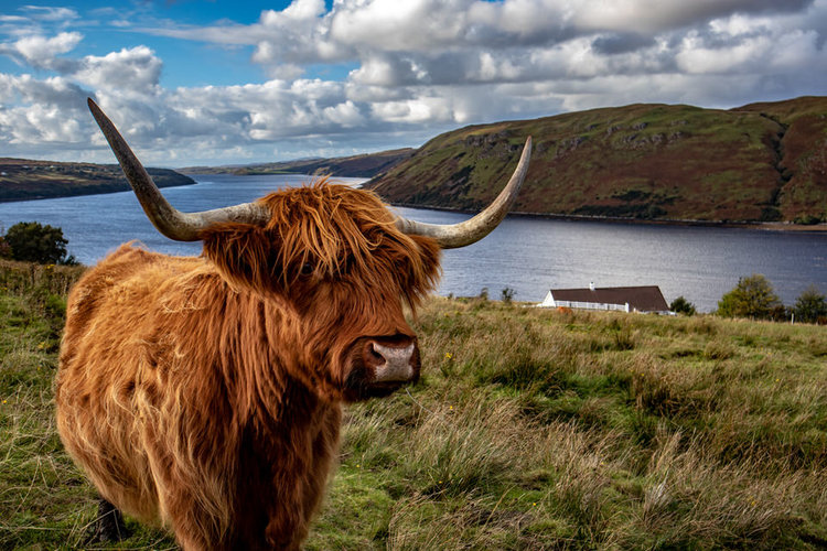 Heeland coo, we love you. Shot and edited by DJ Func Money, who has upstaged me on my own blog once again.
