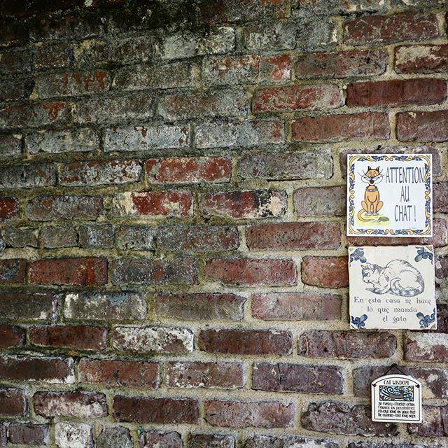 😺🐈 alley cat vibes . . . . . . #brickhouse #charleston #charlestoncharm #southerncharm #charlestonblogger