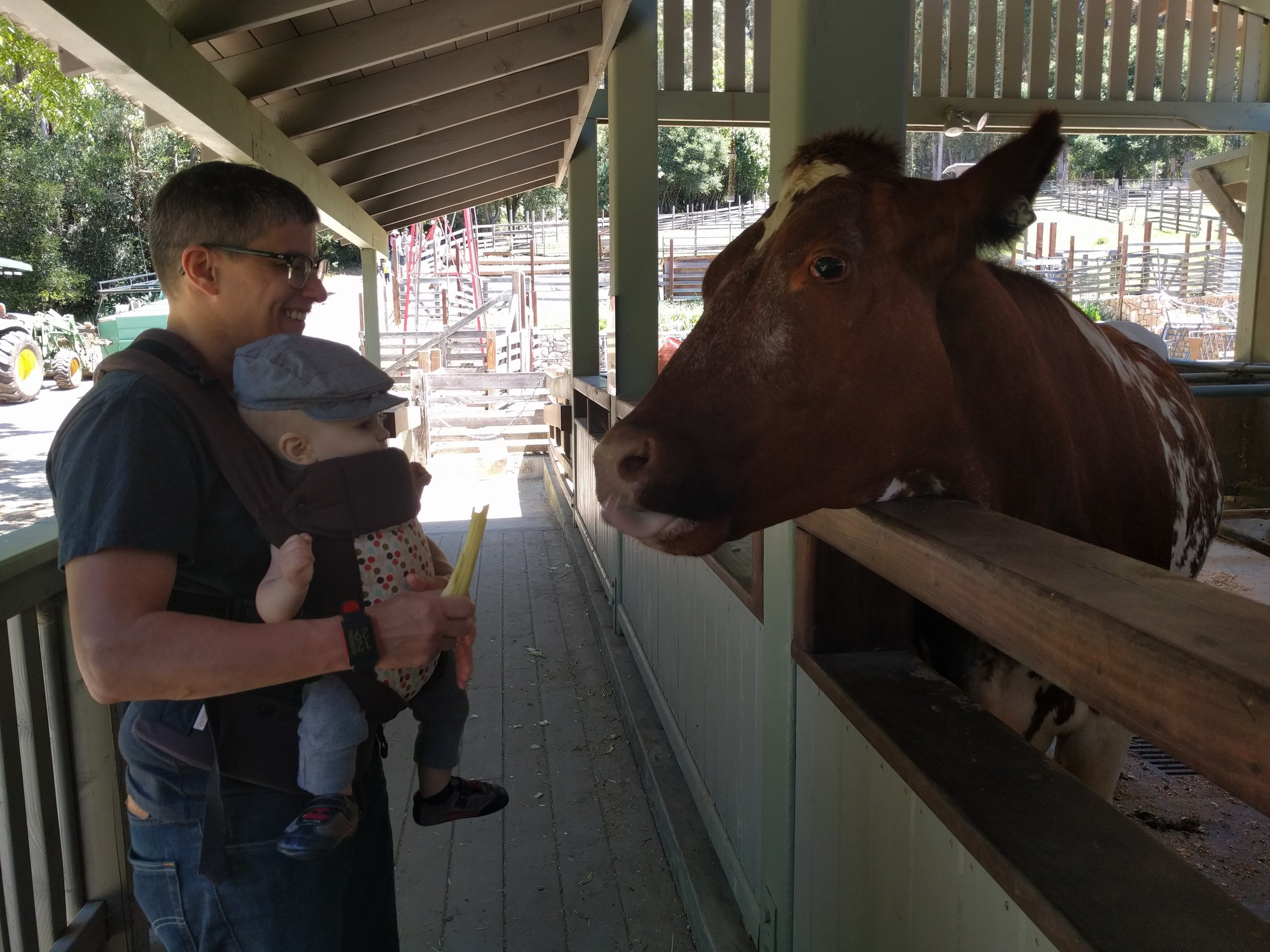 Chris & Dino feeding a cow at Little Farm last summer.