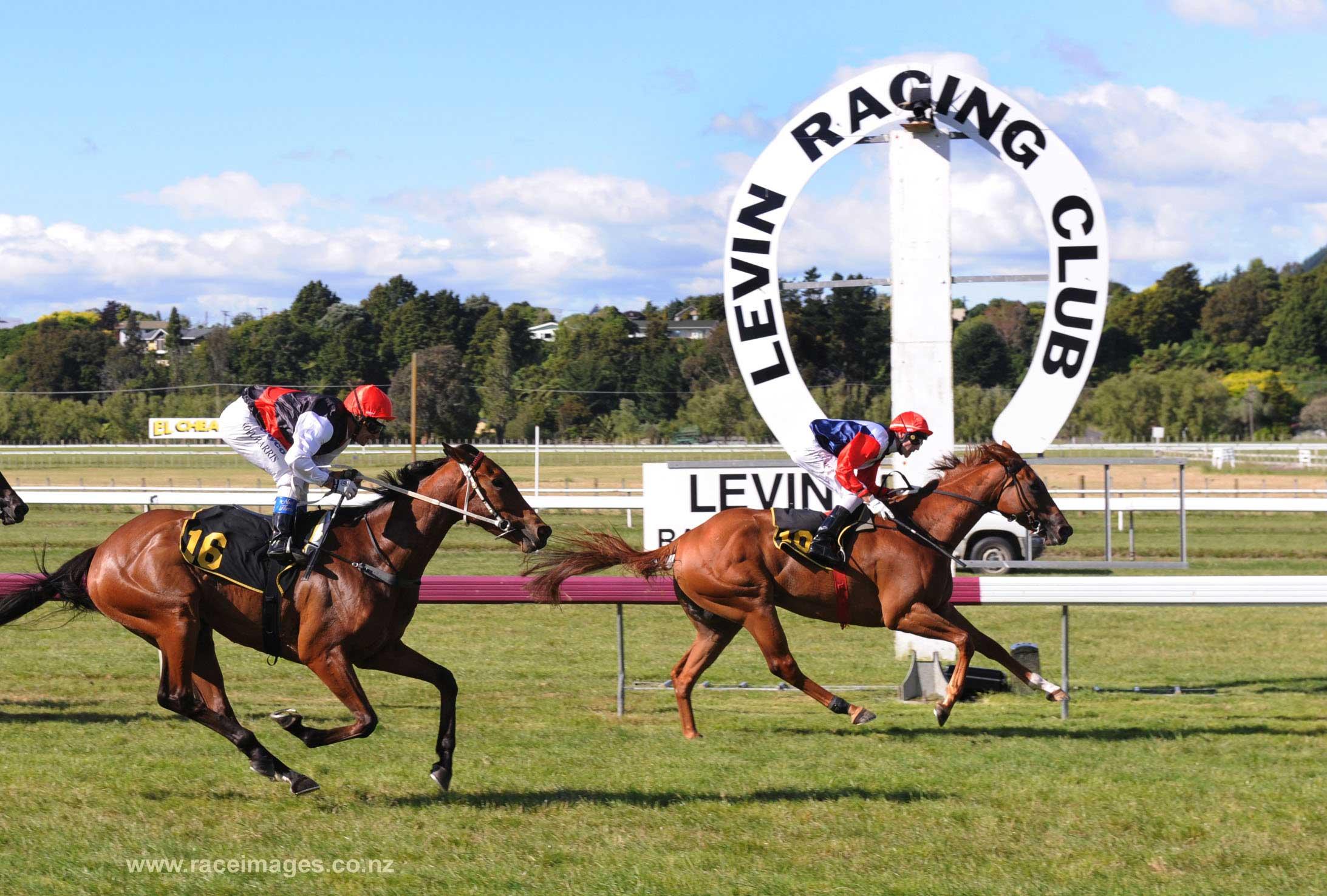 horse-racing-3.jpg