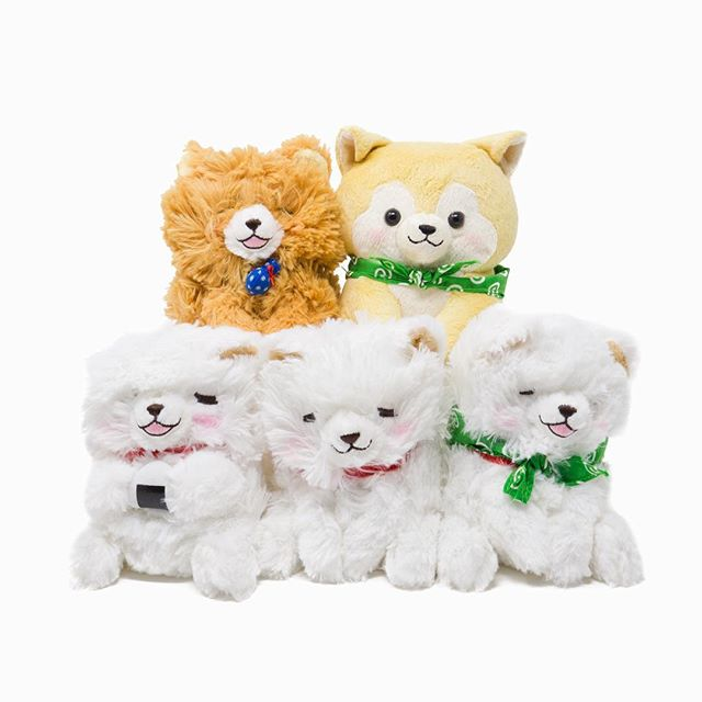 Amuse - Dog Gang 🐶 🐶 🐶 . #toycup #amuse #dog #puppy #japanesedog #akita #akitainu #cute #chowchow #shibainu #samoyed