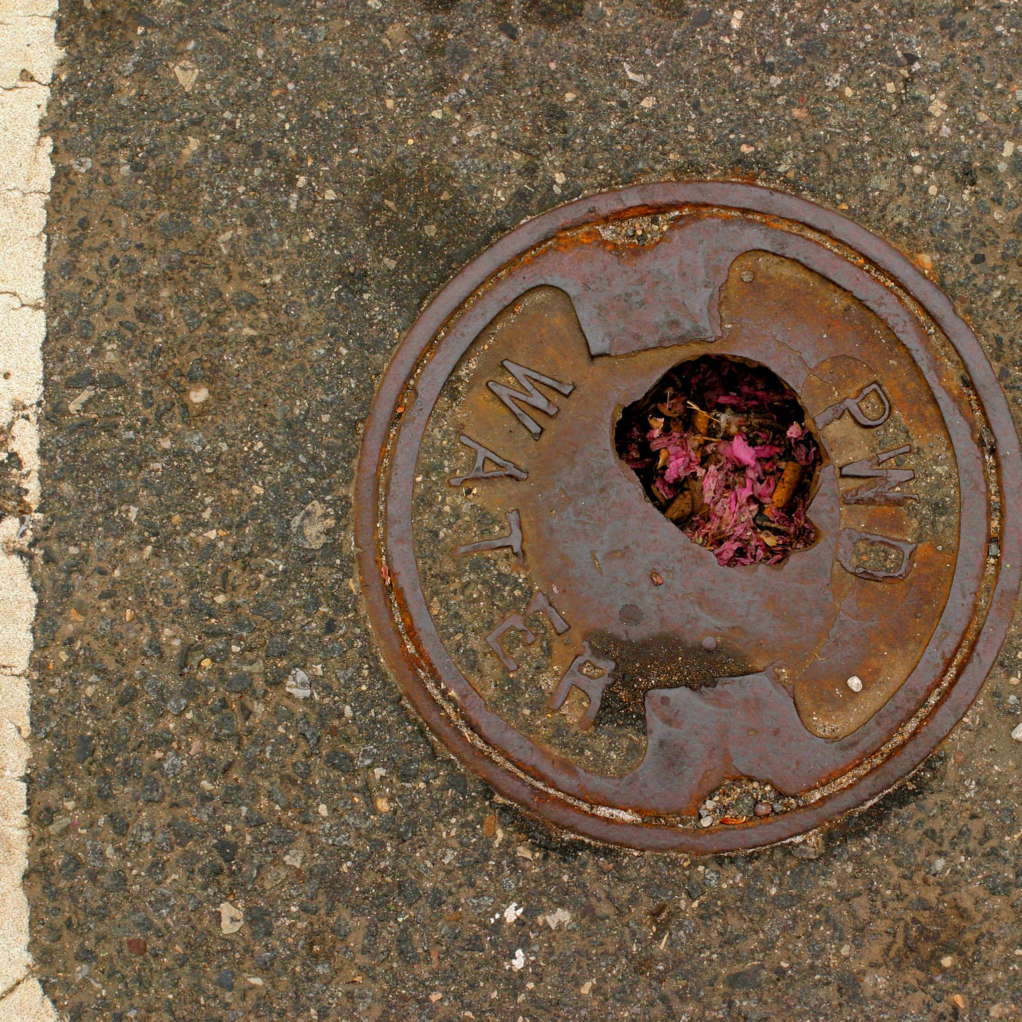 petals in the street.png