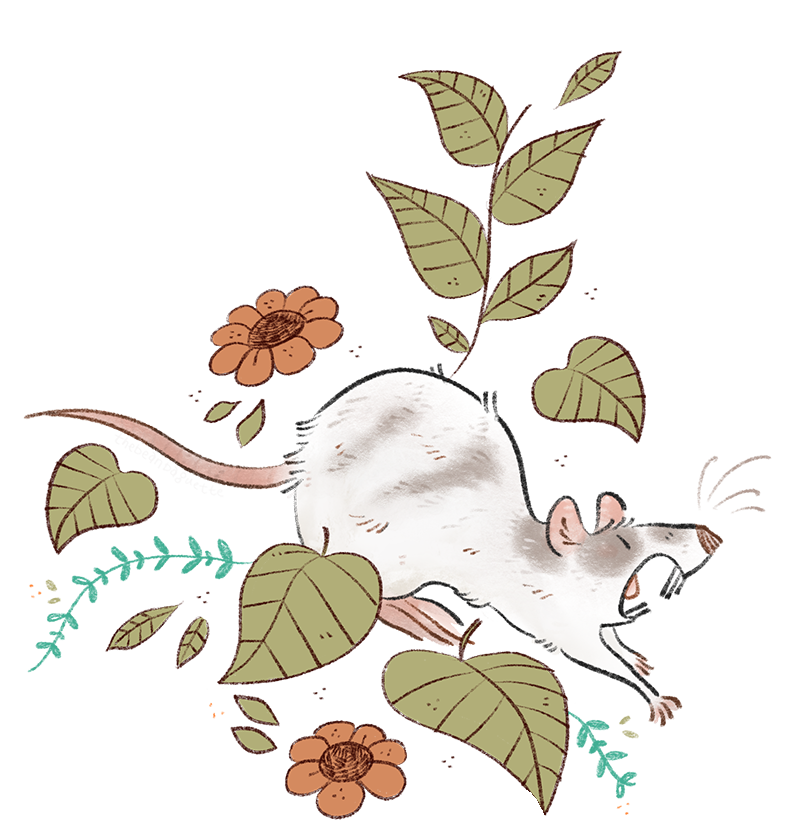 rattie pattern for pets page--moo.png
