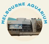 Sea Life Melbourne Aquarium is one of the many tourist attractions located along the Yarra River.