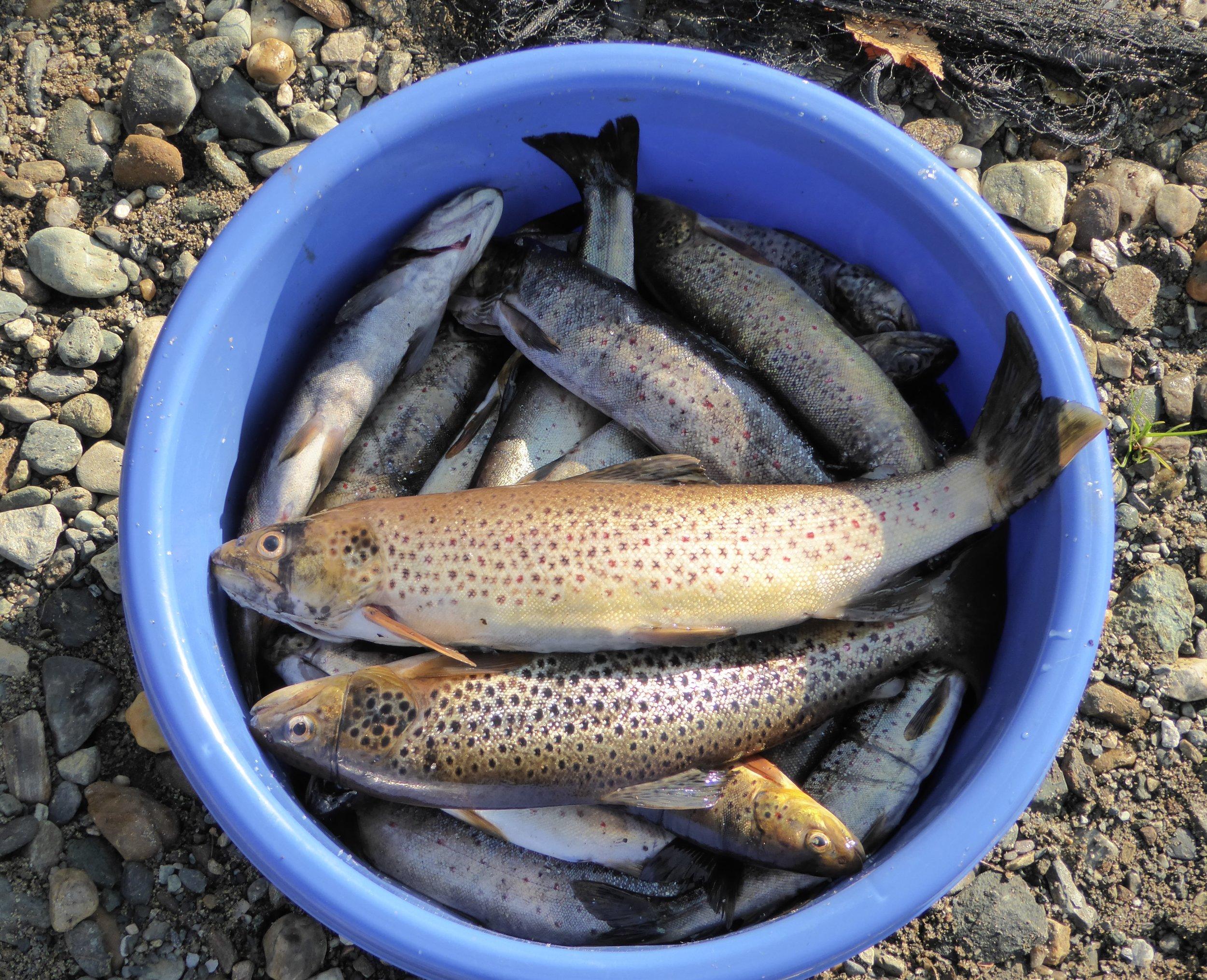 fiskefangst.jpg