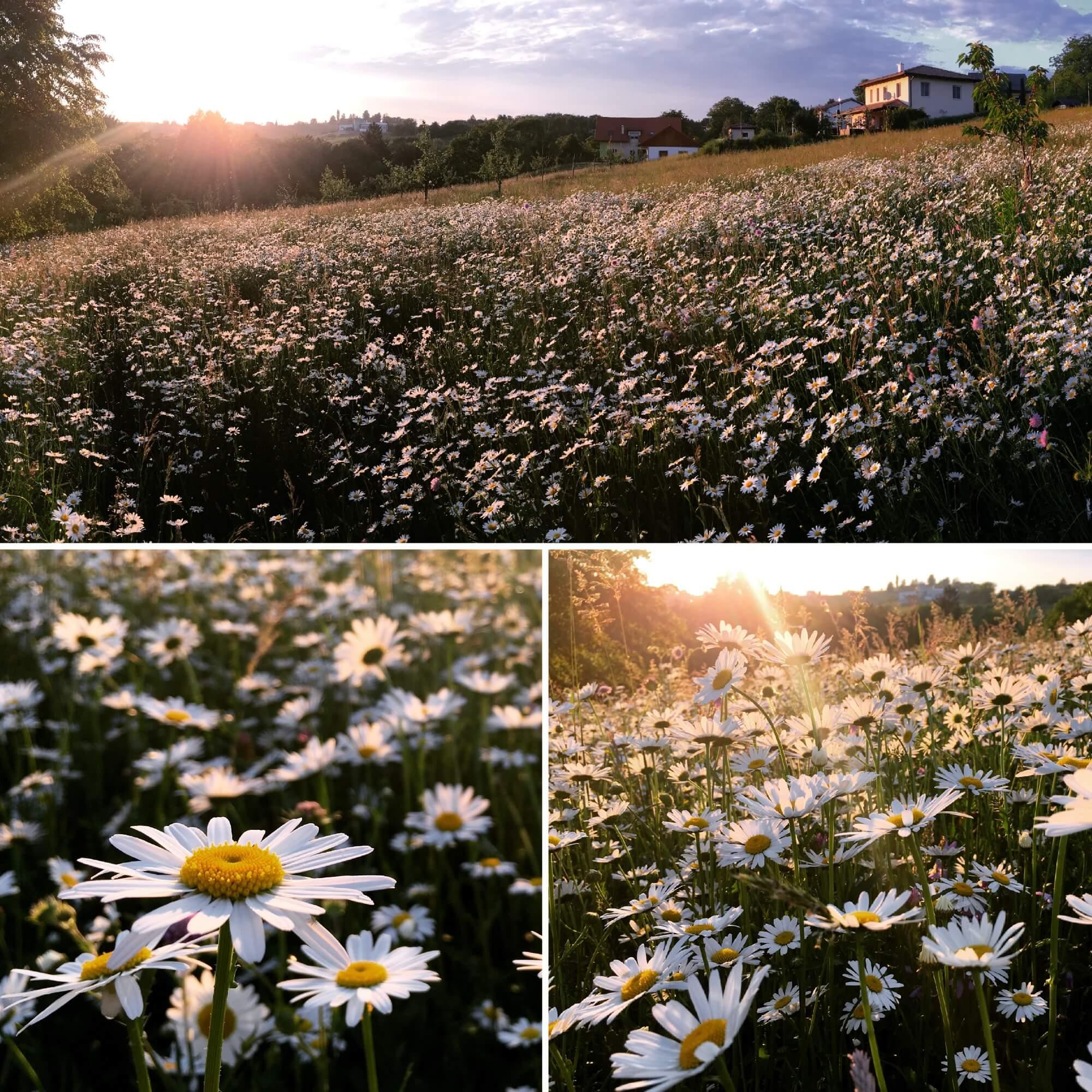 @kirchbergvital  In Siegersdorf gibt's zwar keinen Sandstrand, aber das lässt sich verschmerzen, wenn man ein erstklassiges Blumen-Meer vor der Haustür hat :) #urlaubzuhause #zuhauseistesdochamschönsten #steiermark💚
