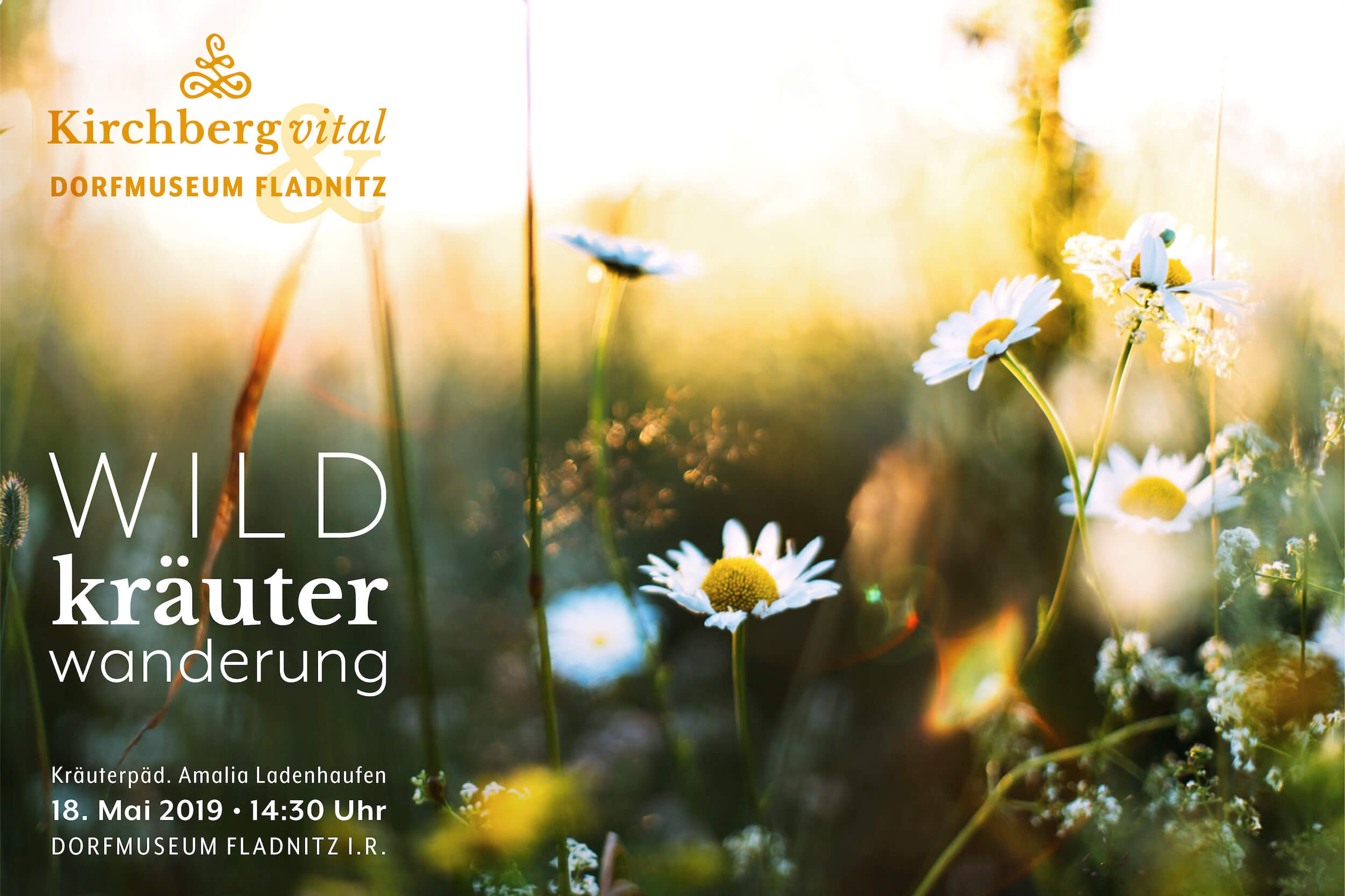 Wildkraeuter-Wanderung_BANNER-min.jpg