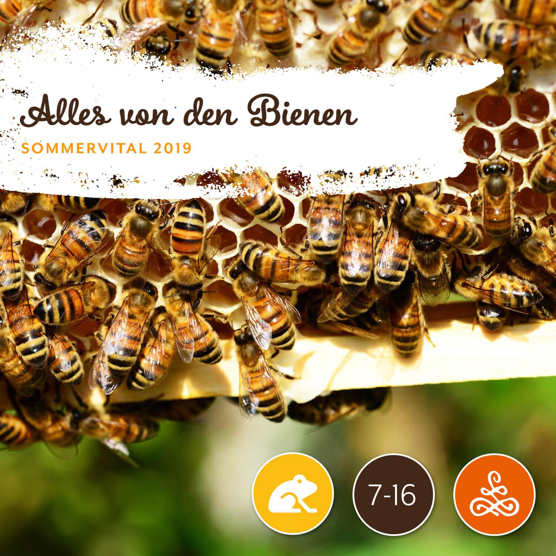 Alles von den Bienen - Gerhard Zettl | Gartenservice ZettlAm Freitag von 15:00 – 17:00 Uhr