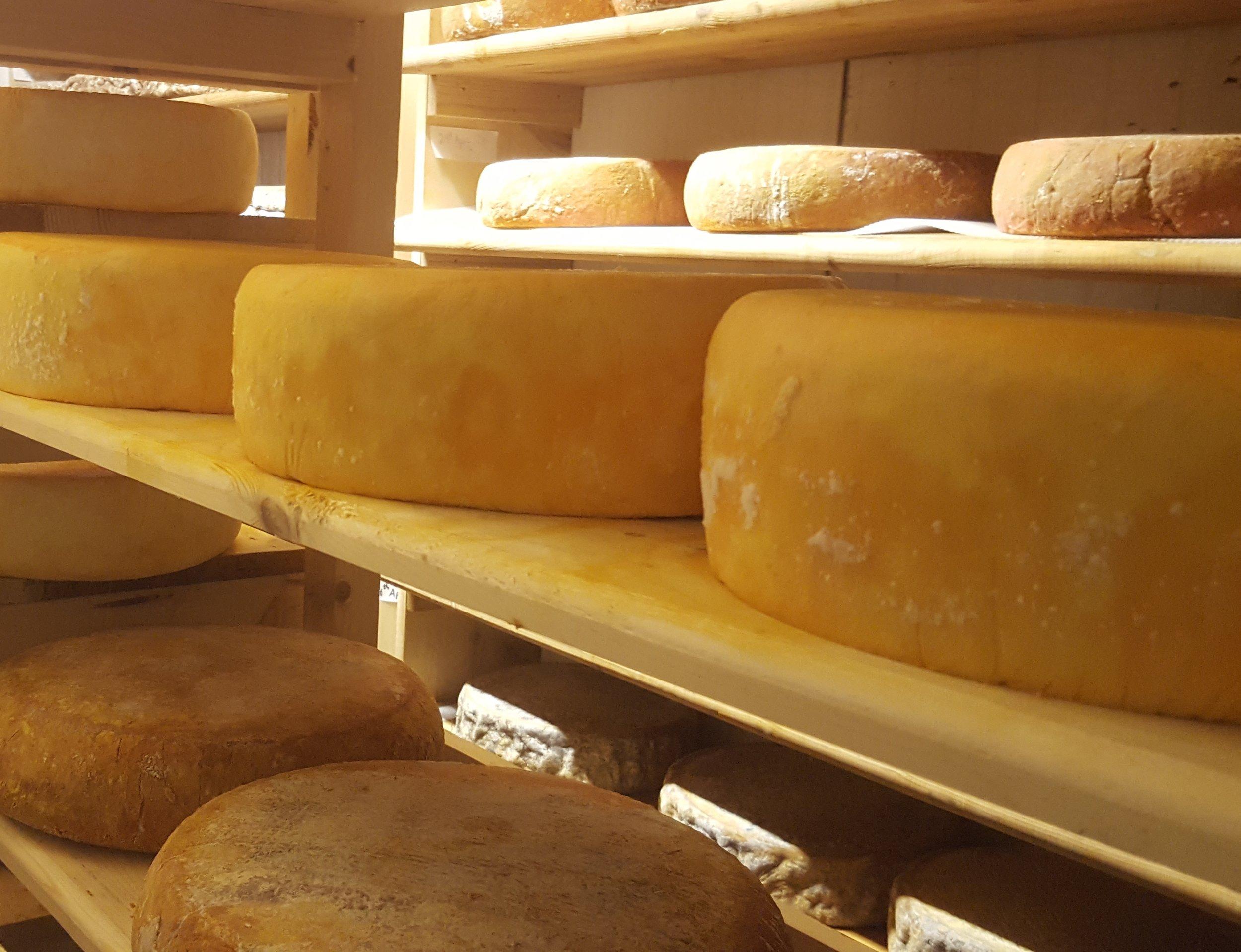 CHEESE Velvet Cloud & Rockfield Cheese maturing.jpg