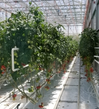 Vineland TOV Greenhouse tour.jpg