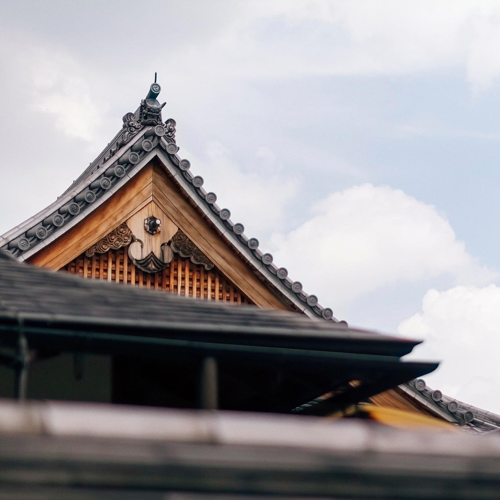 japanese-zelkova.jpg