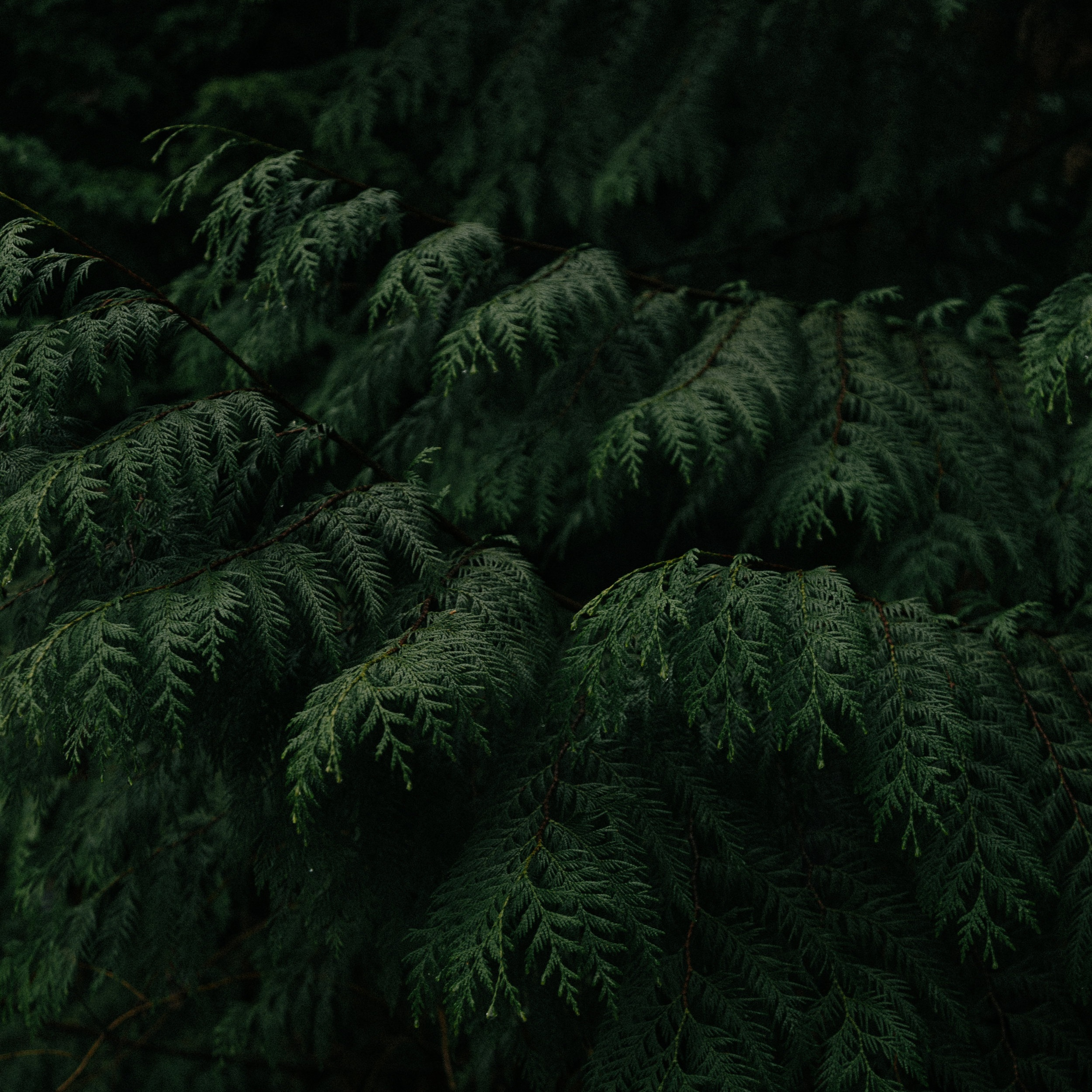 softwood.jpg