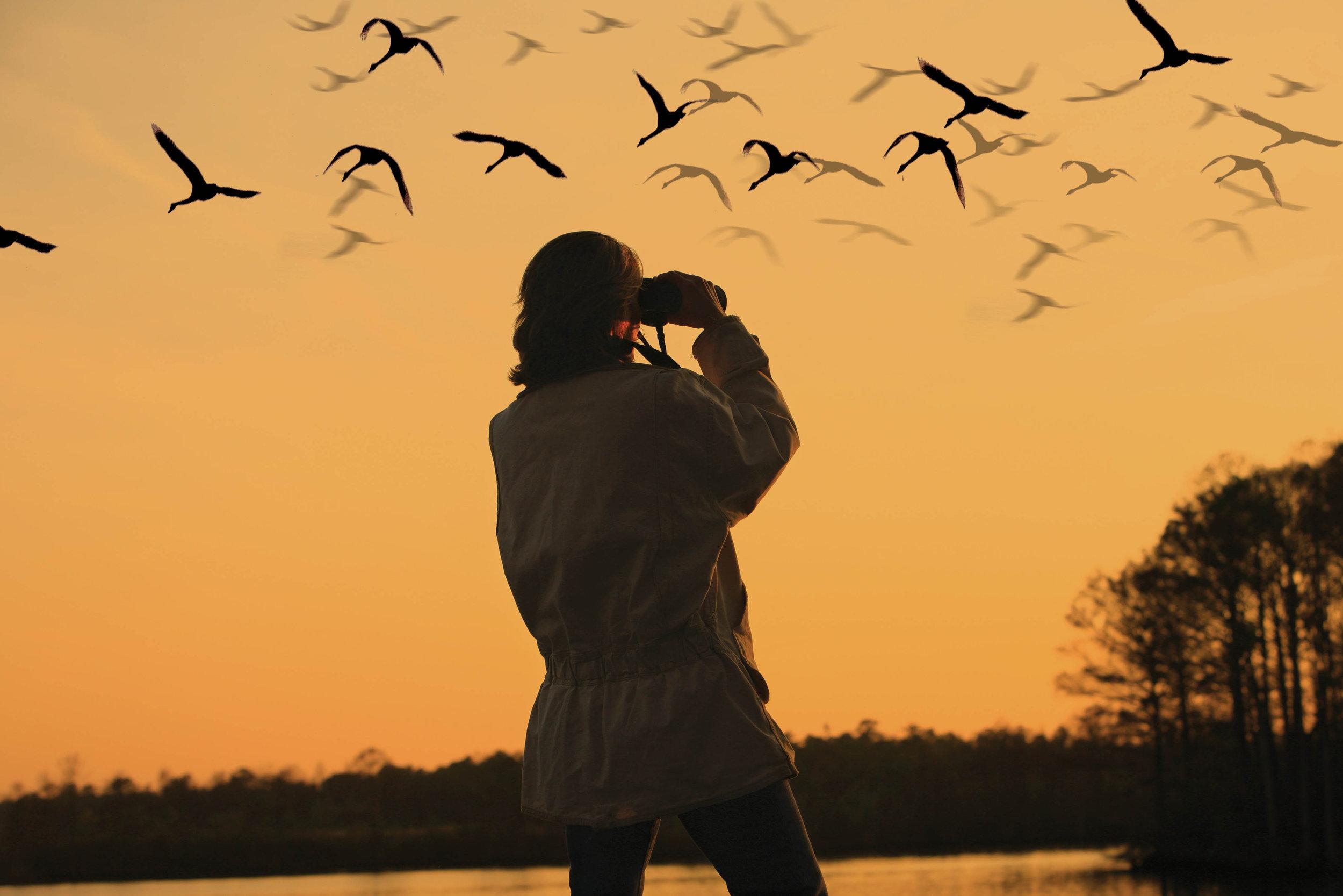 bird watch.jpg