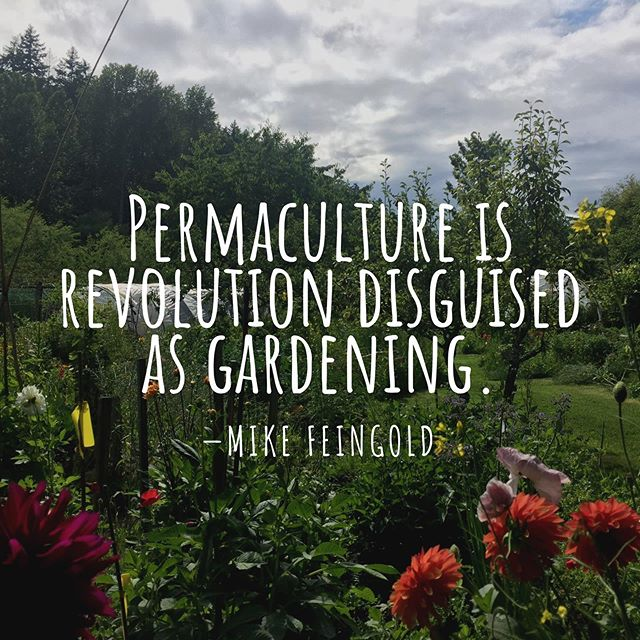 "Many of you may have heard about permaculture before, but if you haven't, it is a beautiful thing to learn more about! With all of the damage that human beings have caused to the earth, and all of the existing social and environmental challenges we face, many of us are aware there is a need for great change. How can we live on the land in a way that doesn't harm it? How can we honor nature and live in harmony with the earth? It is a beautiful ideal to wish to live sustainably, but how can we make it a reality? Permaculture offers many answers to these questions. There are many ways to define this developing field, but one definition that I enjoy is ""the practice of designing sustainable human habitats following nature's patterns and systems."" It has also been defined as ""the conscious design and maintenance of agricultural systems that have the productivity, diversity, and resilience of natural systems."" As I understand it, Permaculture is a perspective and a tool, a way of looking at a landscape, seeing the many elements and their functions, and learning how to work with them in an intelligent way. It's a recognition of the interconnectedness of all things, and a realization that all living things are constantly in relationship, and if we understand these relationships, we can design systems in such a way that we can create more abundance and harmony in a landscape, providing ourselves and others with food, shelter, space, and whatever else we are looking to give or receive, but doing so in a way that does not harm nature and its ecosystems. Permaculture offers us a way to truly live in harmony with the earth. It was founded by Bill Mollison and David Holmgren, who combined the terms ""permanent"" and ""agriculture"" to form ""permaculture,"" which has since evolved to also be a combination of ""permanent"" and ""culture"" as we cannot separate ourselves and our relations from the environment in which we live. It is an incredibly practical and broad discipline that is alive and growing, and I encourage you all to look deeper into it for yourselves! 🌱  @josephpkauffman  #permaculture"