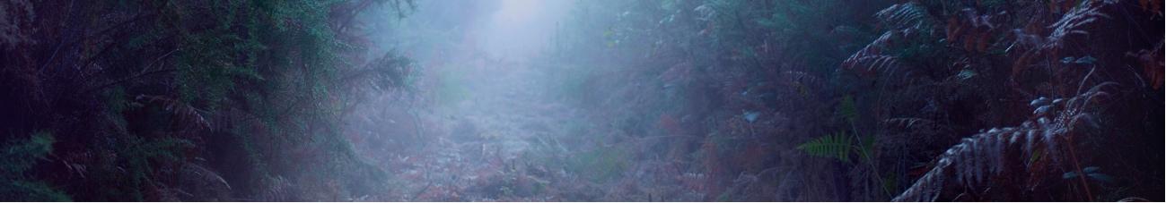 bande-forêt.jpg