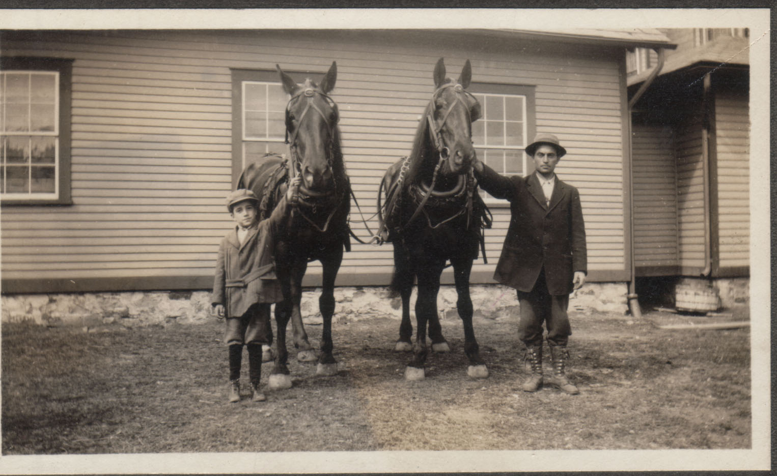 HorsesPaquetteA.jpg