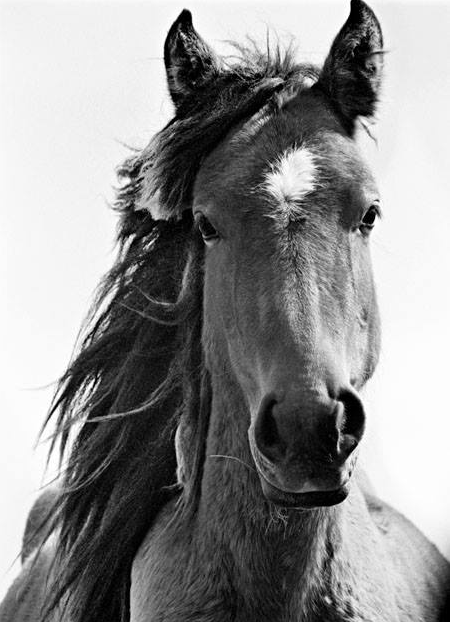 Robert Dutesco, Wild Horses of Sable Island
