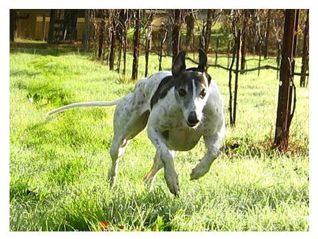 Run-Dog_LOGO-464x348.jpg