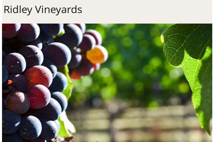 Ridley-Vineyards_GRAPES.jpg