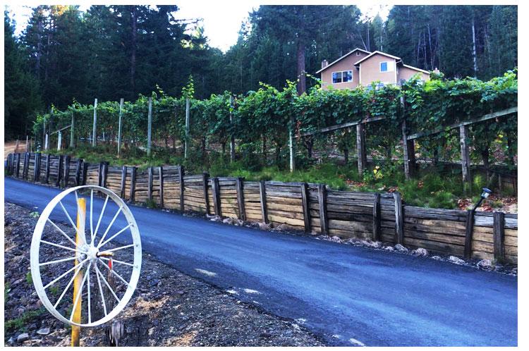 Leal-Vineyards.jpg