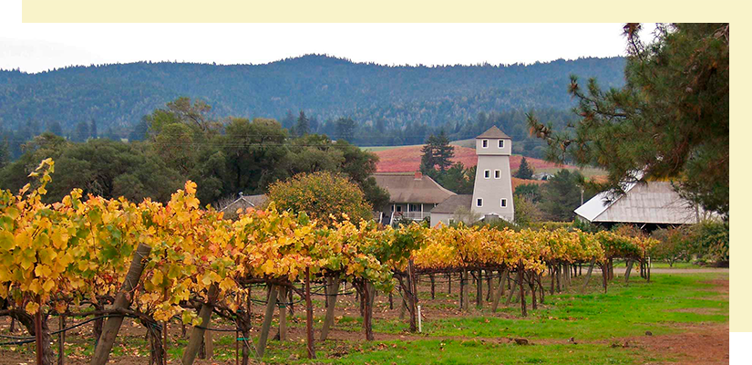 Handley_Winery.png