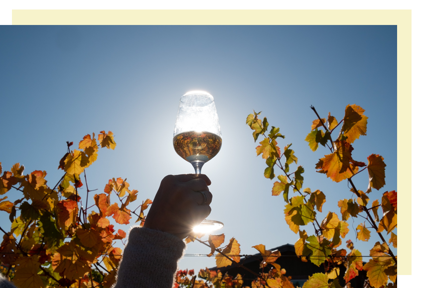 White-Wine-Festival_Anderson-Valley.png