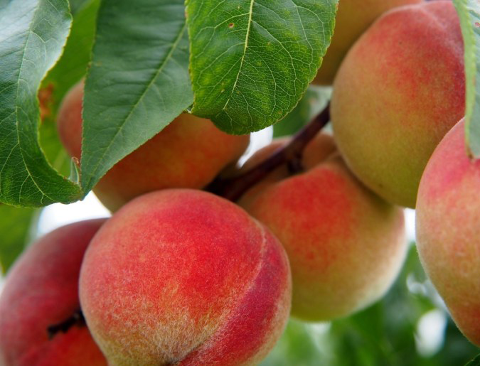 IGTD | National Peach Month: Restaurants Cooking Up Palisade Peaches - Call – Summer Salad features Colorado peaches, creamy burrata, frisee and selected seeds.
