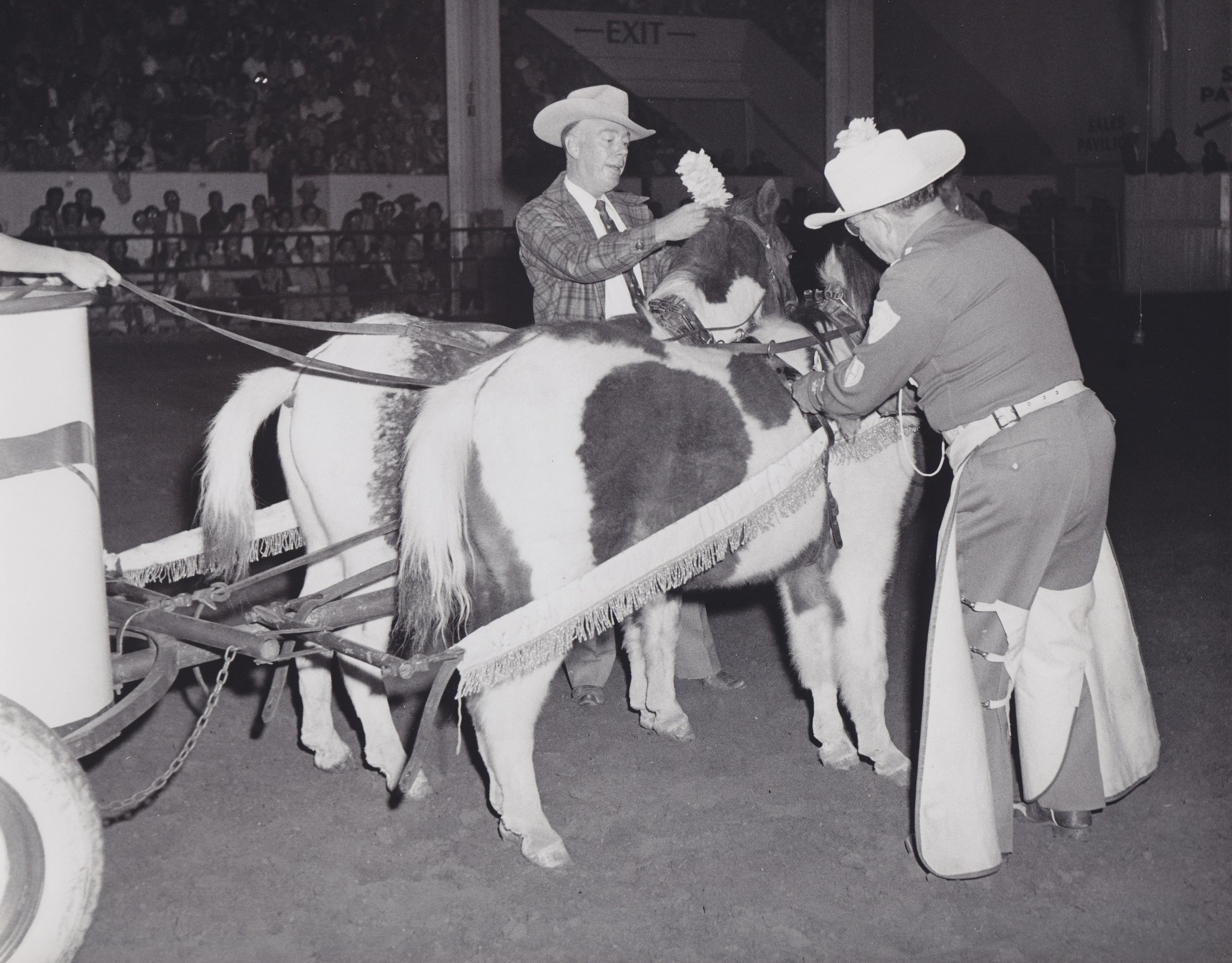 "Famed Denver Post journalist Red Fenwick (left) helps Westernaires founder Elmer Wyland (right) to ceremoniously name the ponies ""Nip"" and ""Tuck"" at the Westernaires Annual Show ""Horsecapades"", 1960."