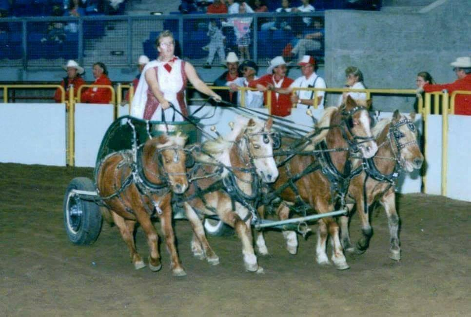 Danielle Williams with chariot ponies Smokey, King, Snort, and Cinnamon, at Westernaires' 1994 Horsecapades Annual Show.