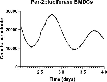 Circadian rhythms in Dendritic cells. We use Per2::luciferase reporters to measure the molecular clock within cells. This allows us to understand how certain conditions are affecting clock function .