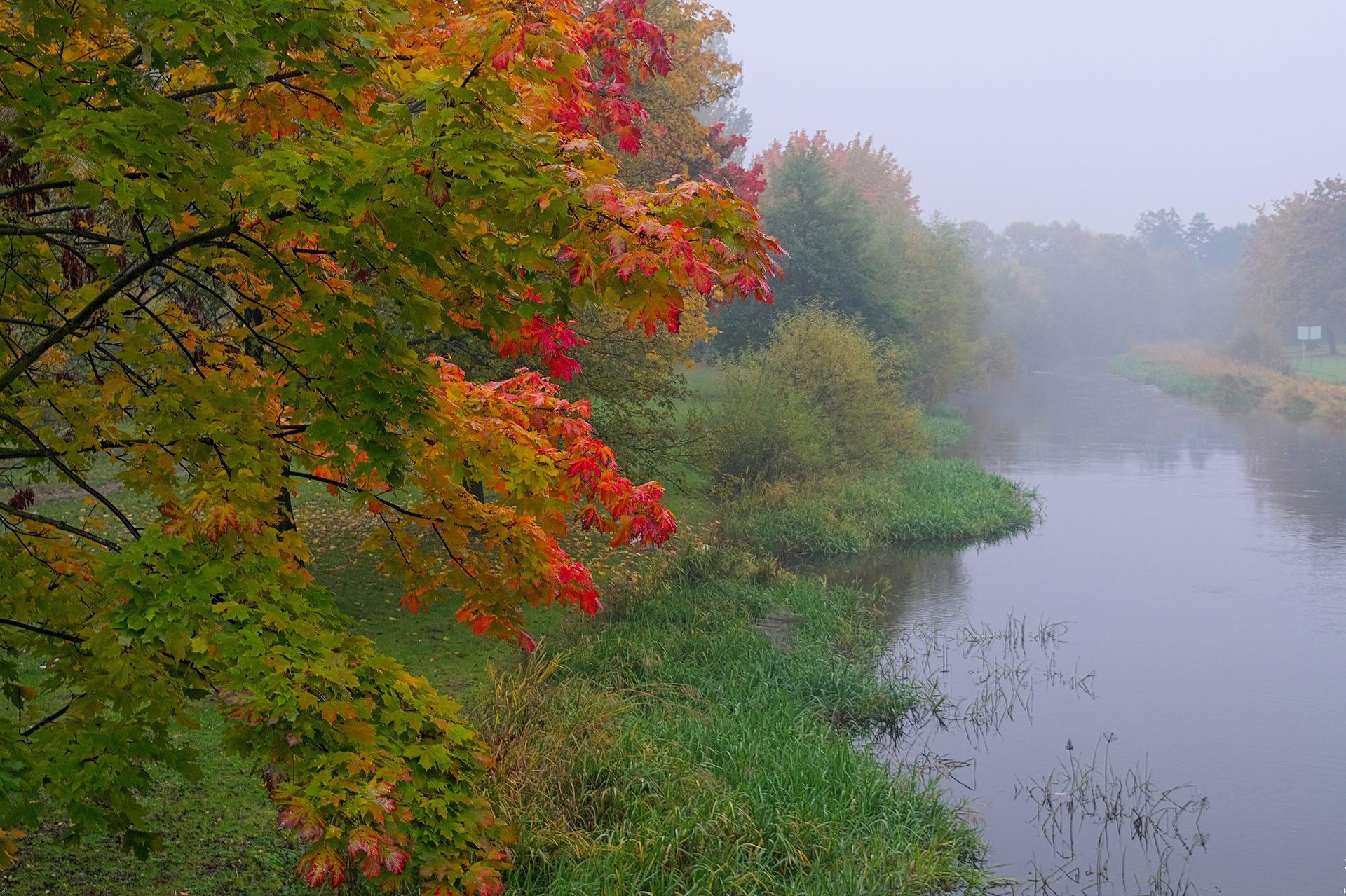 the-fog-2723356_1920.jpg