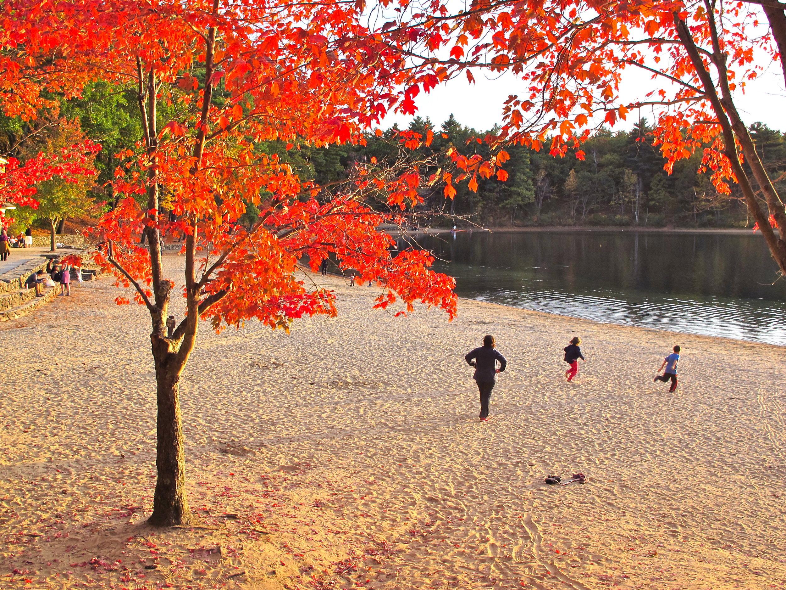 AutumnWalden.JPG