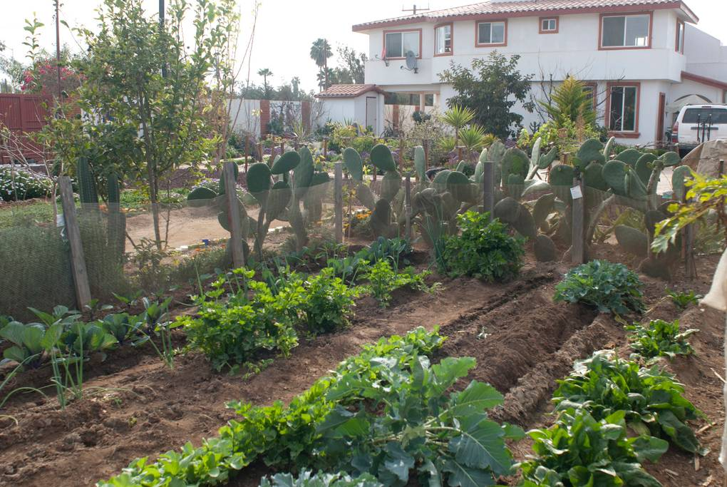 Your Own Garden.
