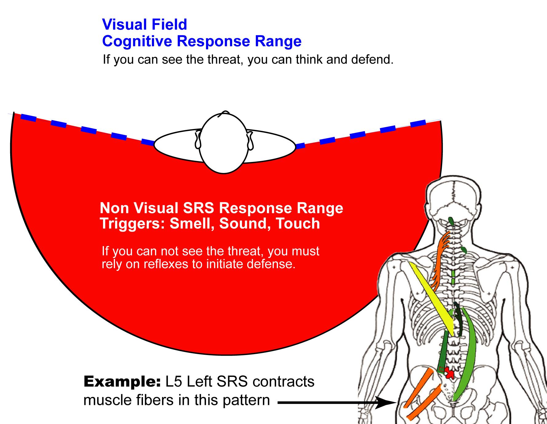 Spondylogenig Reflex Response Range.jpg