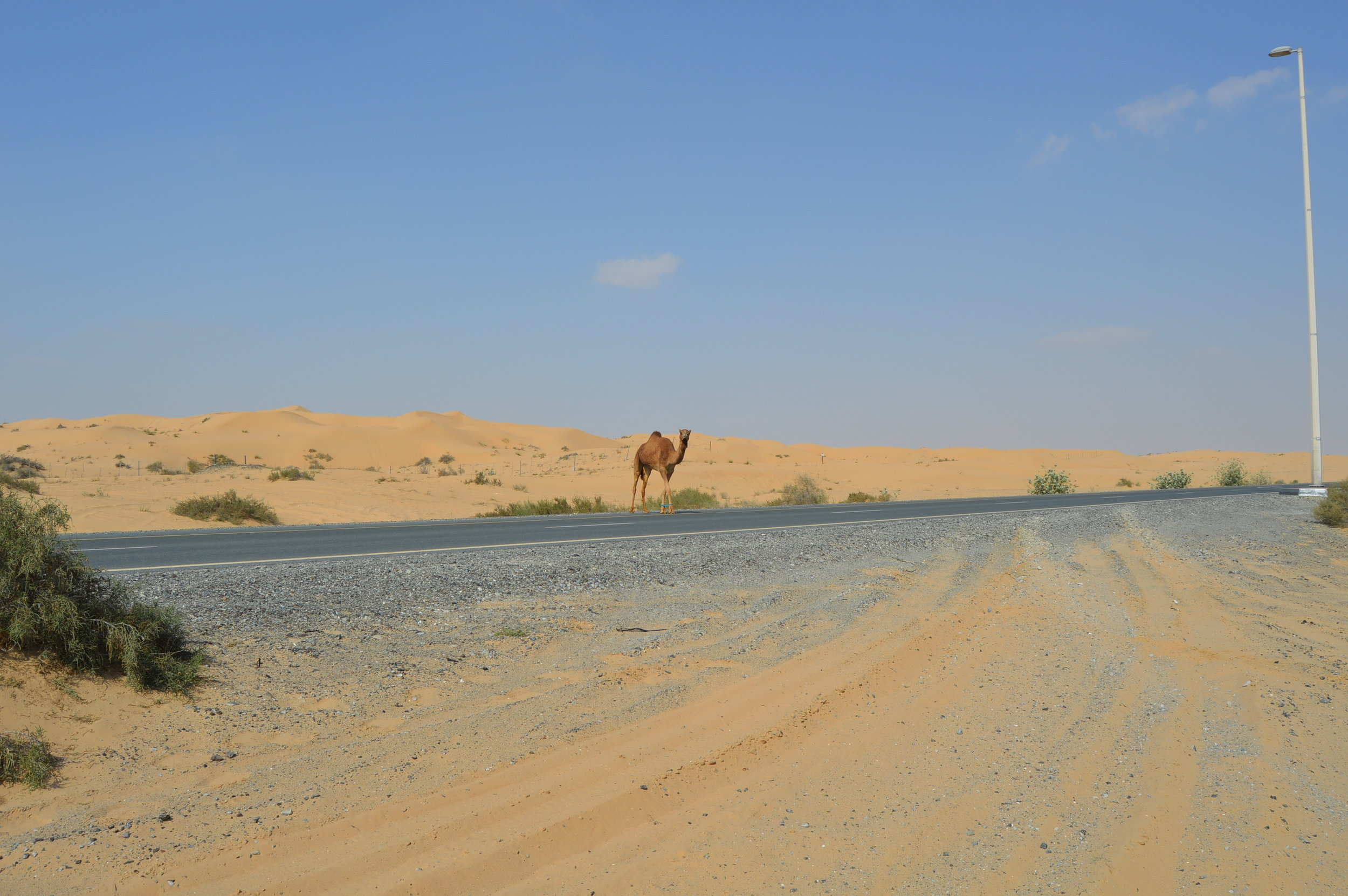 Day 7: - Searching for camels, and our 36 hour travel back to the states.