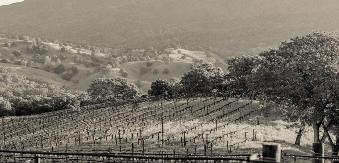 Source: Favia Wine