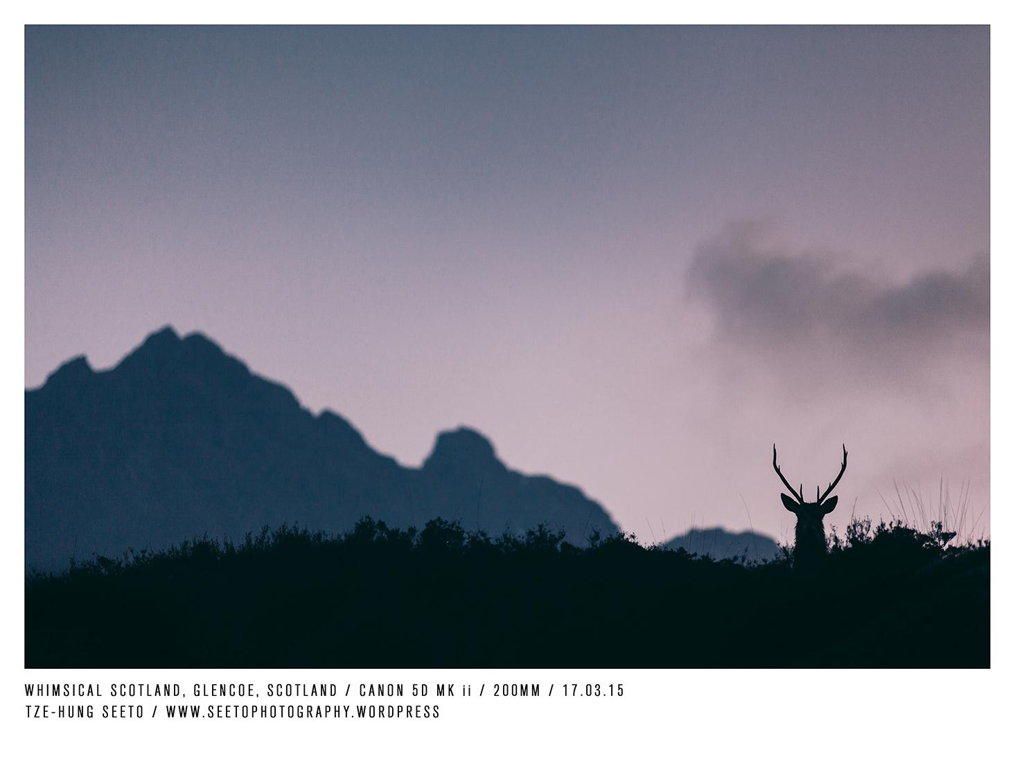 Stag, Glencoe 1_CP.jpg