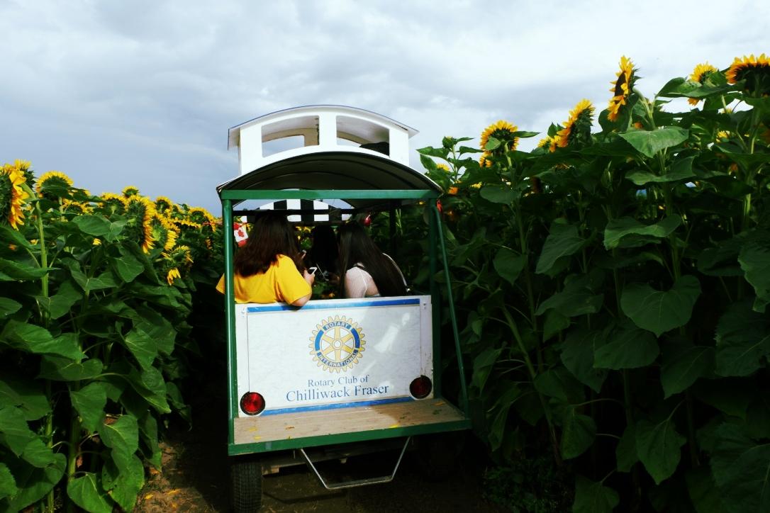 chilliwack sunflower festival prices